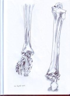 18-August-2011-Feet-bones
