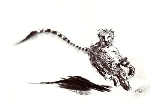 Turning-Cheetah